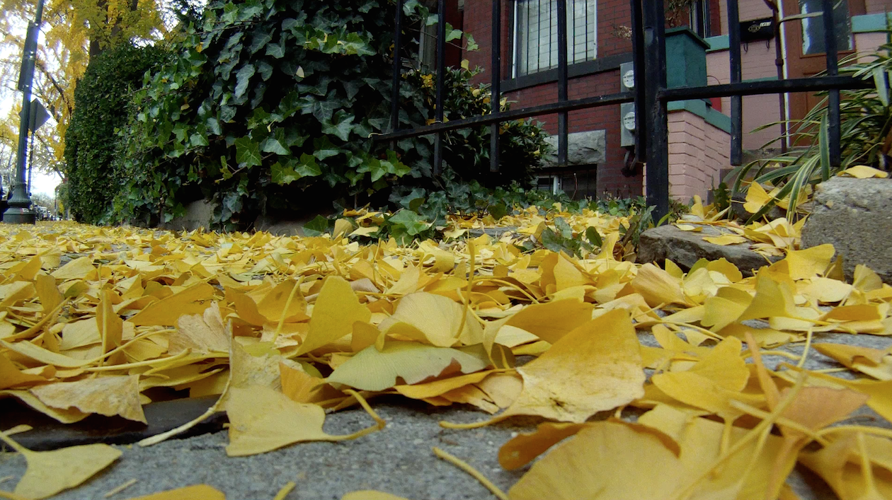 gingko-attack1